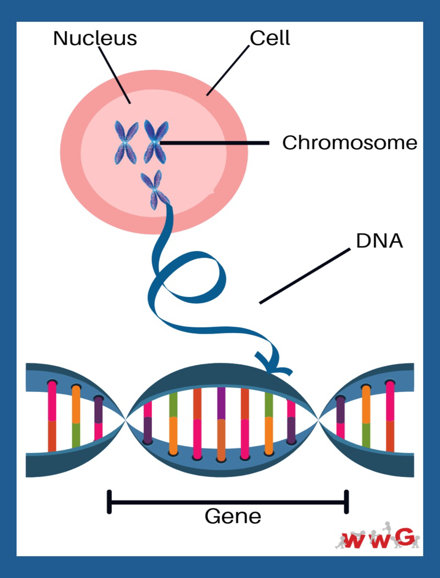 genetics and screening Image 1